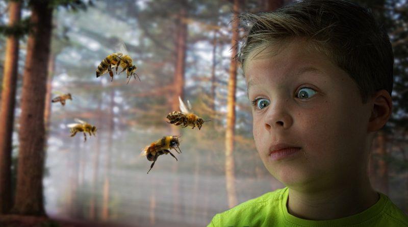 Comment traiter les piqures d'abeilles des guêpes et des frelons