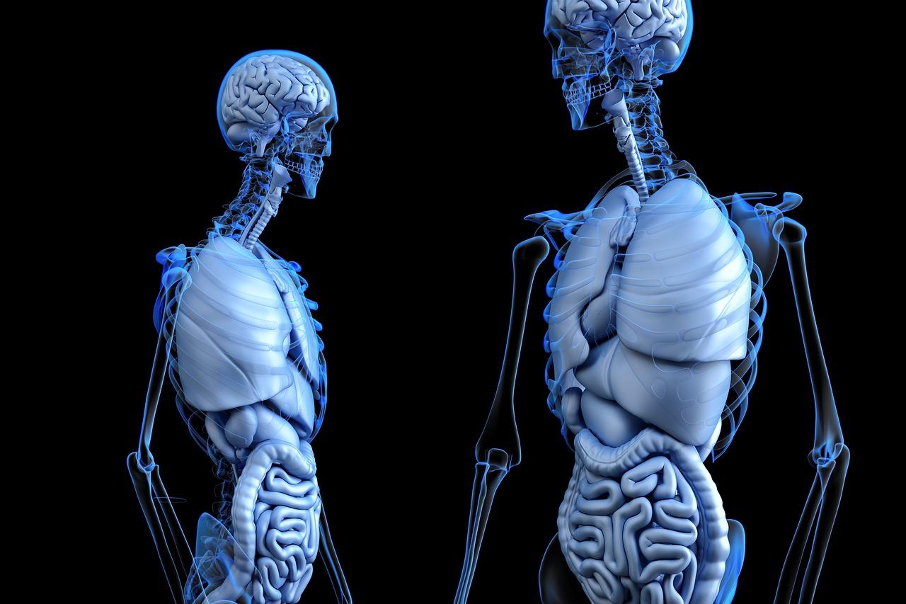 la médecine par le 3D