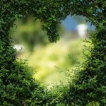 Des plantes pour éviter le cancer et l'adénome de la prostate