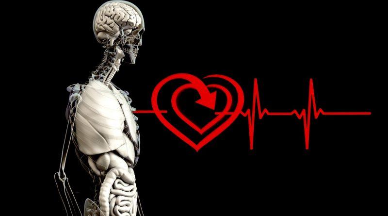 Comprendre le fonctionnement du coeur pour mieux en prendre soin