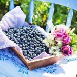 Lutter contre l'hypertension grâce aux myrtilles ?