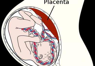 Tout savoir sur le placenta !