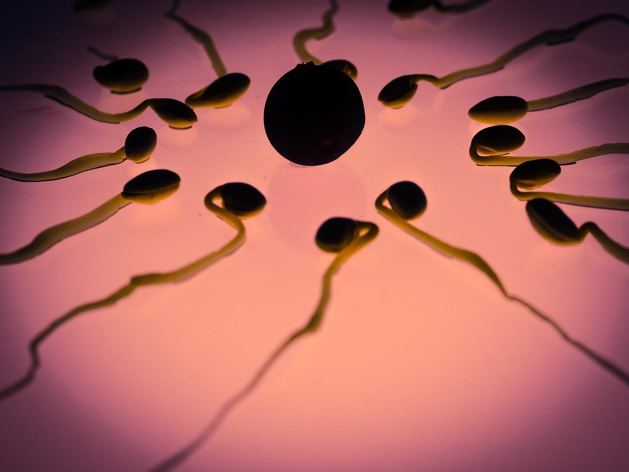 tout-savoir-sur-l-ovulation